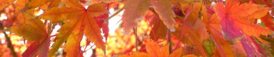 2385-autumn-leaves